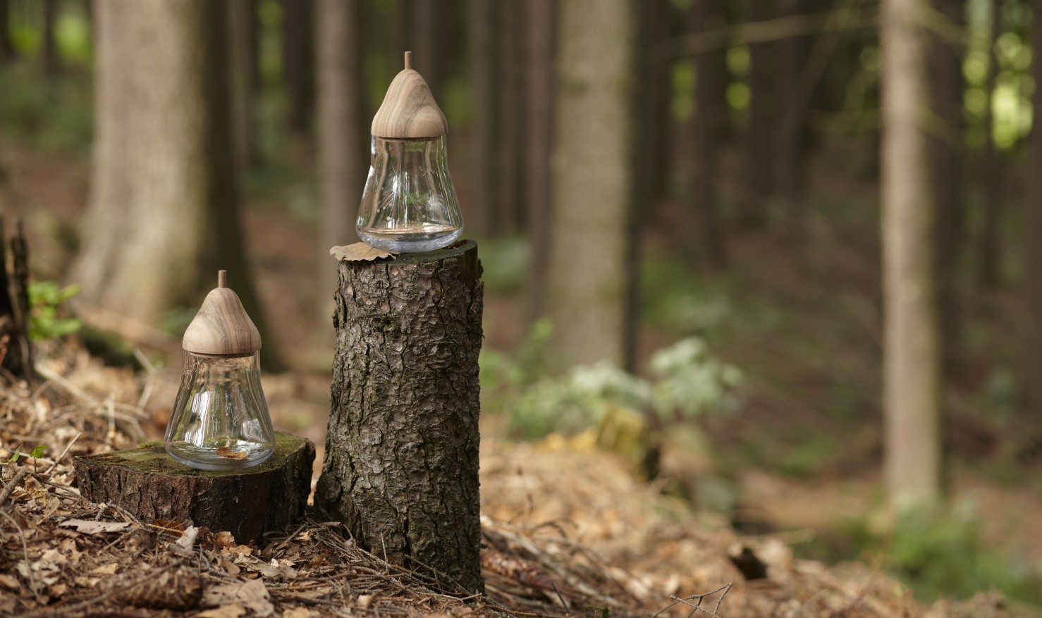 Acorn jar / Among the trees by DECHEM / DECHEM