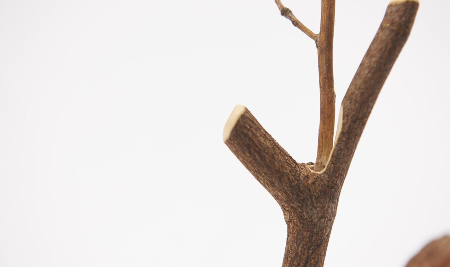 branch by Nozomu Uchida / 内田望
